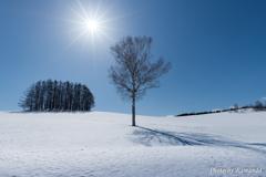 雪原に佇む