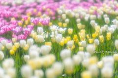 優しい花畑