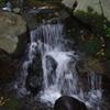 涼 滝 1