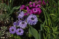 庭の花 1