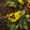 花壇の花 3