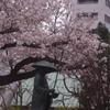 お大師様と桜