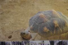 リクガメ 野毛山動物園 10月