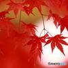 赤の季節2
