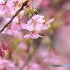 桜が見守ってくれている
