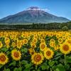 平日の富士山89