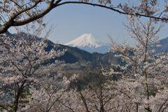 平日の富士山1095