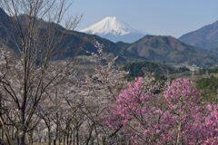 平日の富士山1091