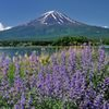 週末の富士山(新作236)