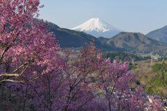 平日の富士山1087