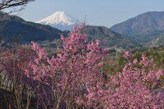 平日の富士山1088