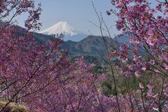 平日の富士山1098