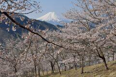 平日の富士山1093
