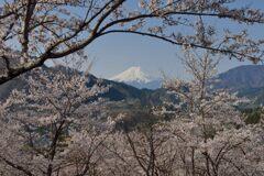 平日の富士山1094
