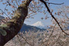平日の富士山1092