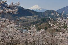 平日の富士山1096