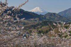 平日の富士山1089
