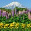 週末の富士山48
