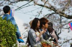 桜の歌を聞こうよ