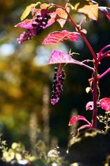 秋の紫みつけた