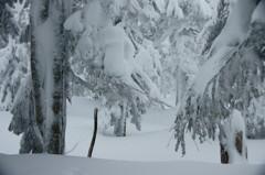 気を抜けば 首まで埋もれる 飛騨の雪