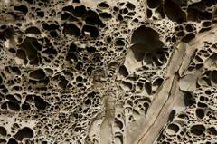 45億年の時を経て