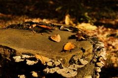 秋の野外ステージ