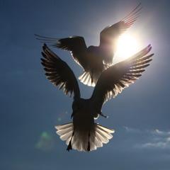 鳥初め^^♪