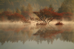 朝靄に色ずく