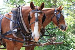 働く馬たち