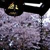 春灯や そぼ降る雨の 昼下がり