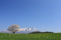 青空と桜と岩手山
