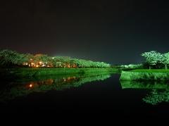五稜郭公園の夜桜
