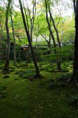 京都旅行(祇王寺)