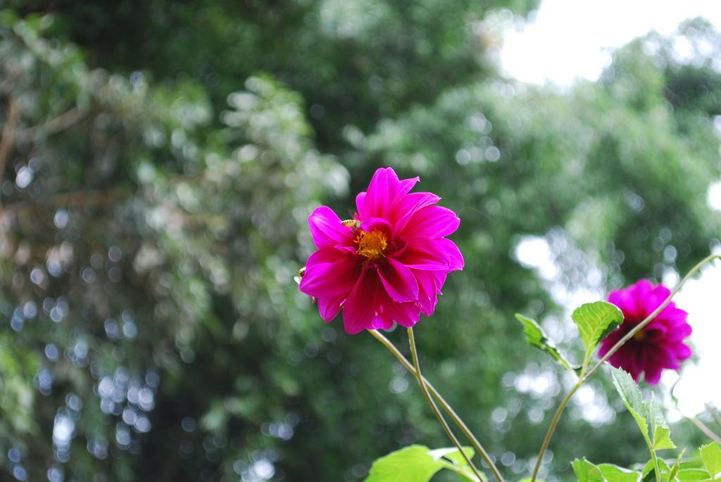 花の蜜にさそわれて
