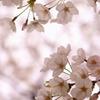 淡彩の花舞