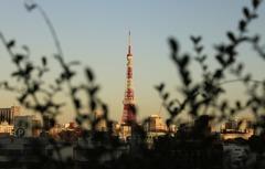 囲われ之東京タワー