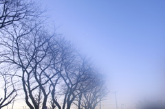 早朝御散歩 壱