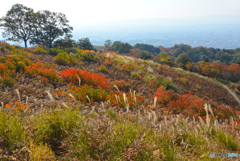 若草山の秋・3