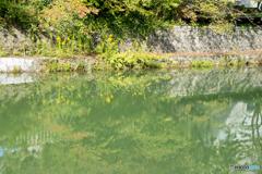 琵琶湖疏水 秋景