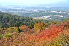 若草山の秋・2