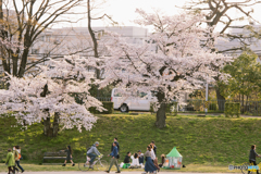 桜と行き交う人々