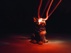 Dog 03/ Light Painting