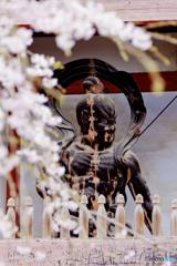 醍醐寺のしだれ桜 3