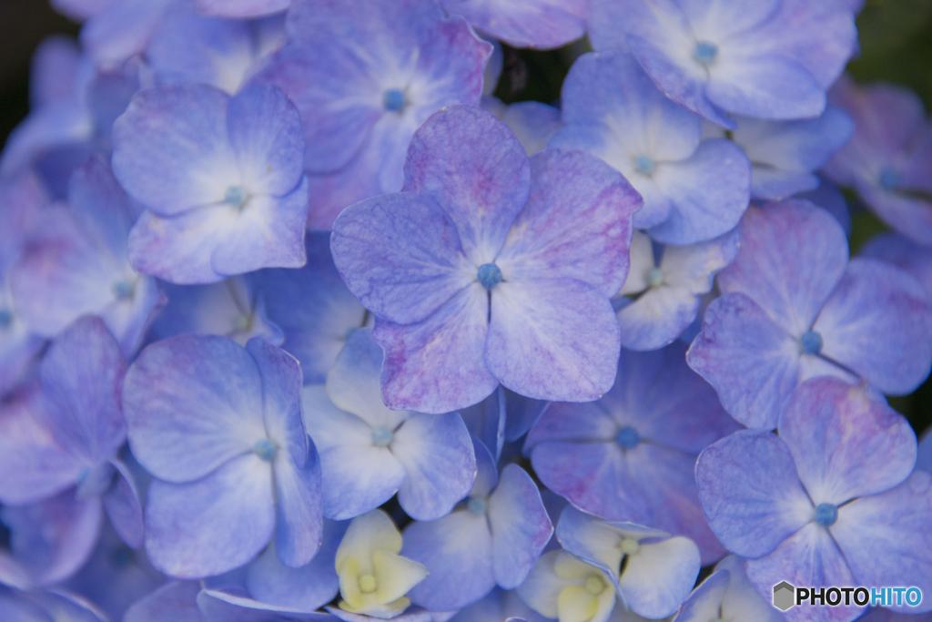青い華 02