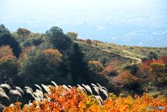 若草山の秋