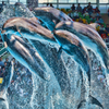 Splash!!@アドベンチャーワールド