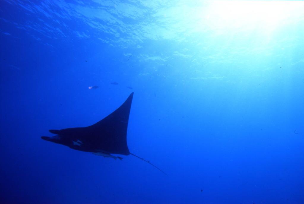 Aquatic blue 3