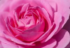 ピンクのフリフリ