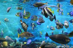 夏の水族館